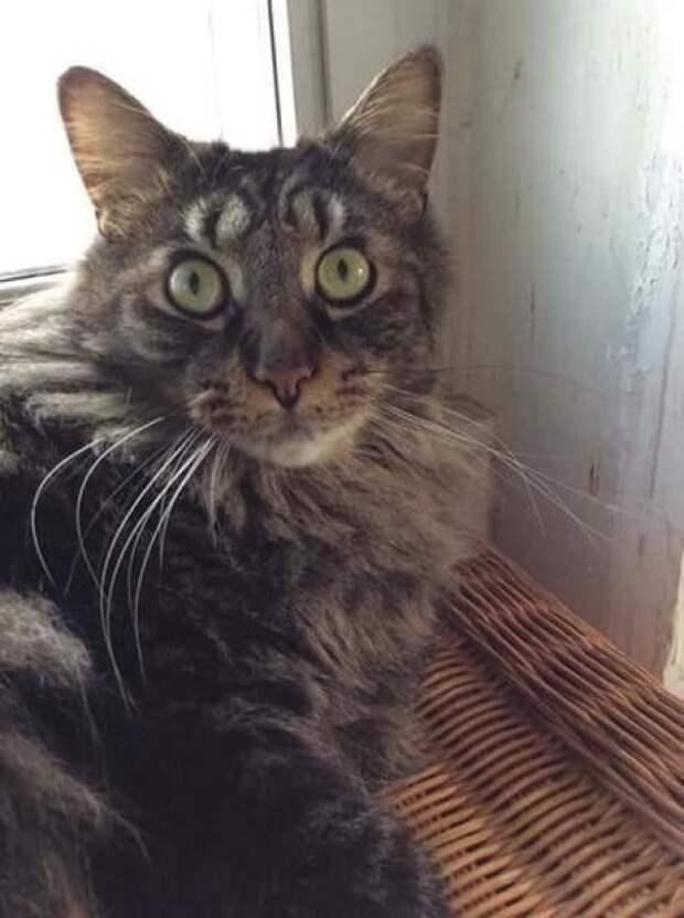 """Кот с """"двойными"""" глазами животные, забавно, коты, кошки, неожиданно, окрас, окрас кошек, фото"""
