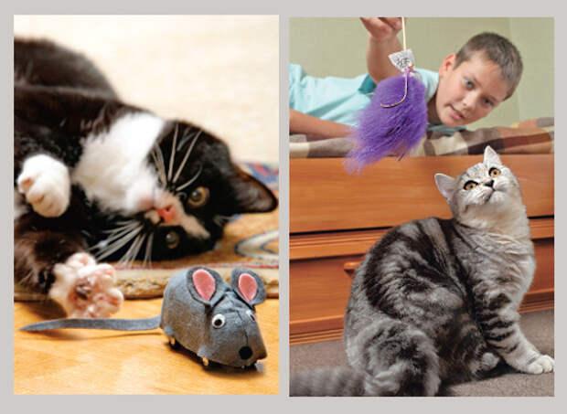 КОШКИН ДОМ. Как сделать кота счастливым