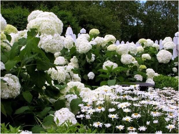 Белый сад. Советы по созданию.
