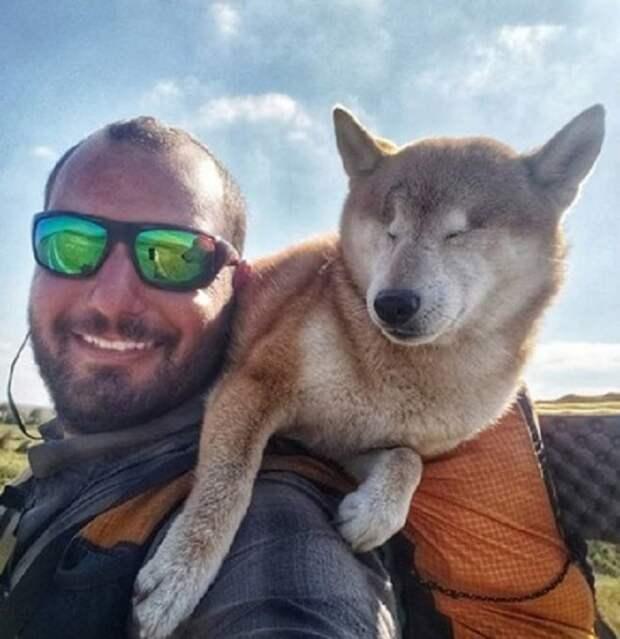 Собака на плече