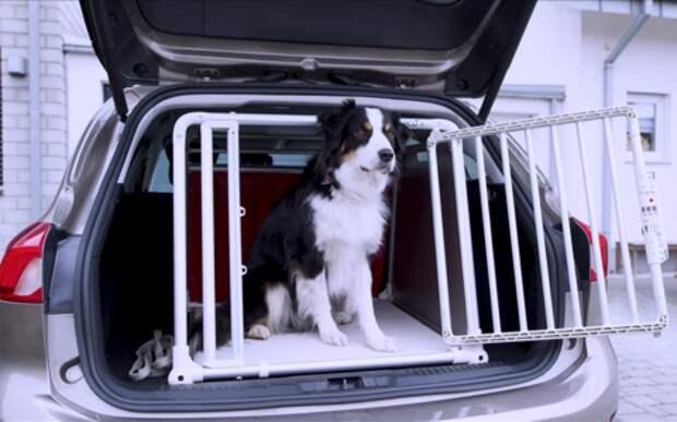 Форд разработал удобную клетку для собак. В Багажнике!