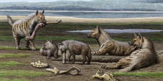 Гиены, которые не в курсе про падаль антропология, динозавры, естественный отбор, кошки, человек, эволюция