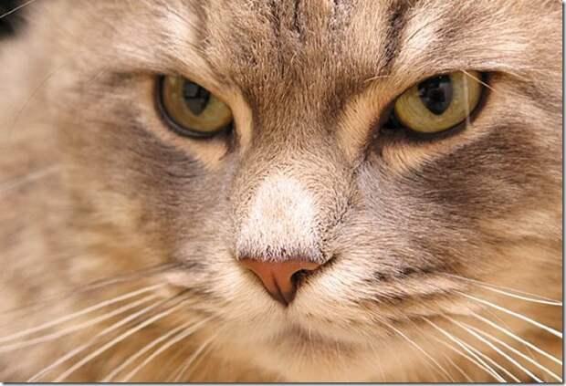 Чeловeк - один из самых лучших, домaшних животных, для Кота.