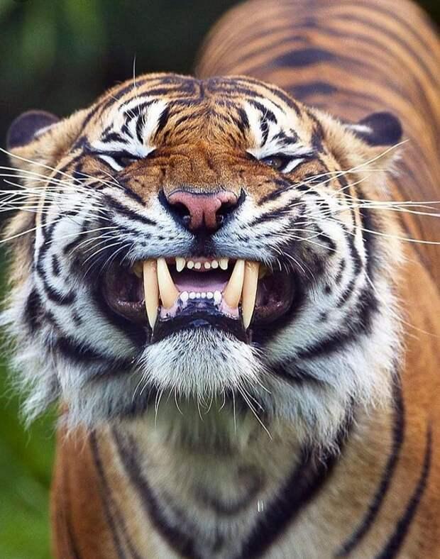 18 фотографий животных, которые на своём примере показывают, что размеры познаются в сравнении