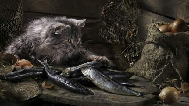 хороший улов, хозяину можно и поделиться:)
