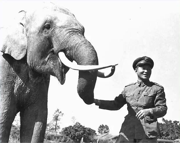 Слон-долгожитель, прошедший войну. /Фото:want-daily.com