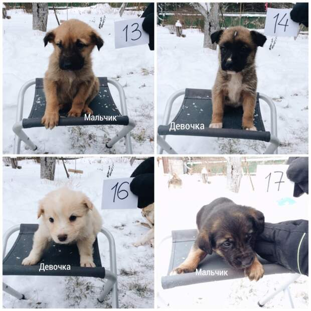 Всем спасенным под Рязанью щенкам нашли хозяев за пару дней