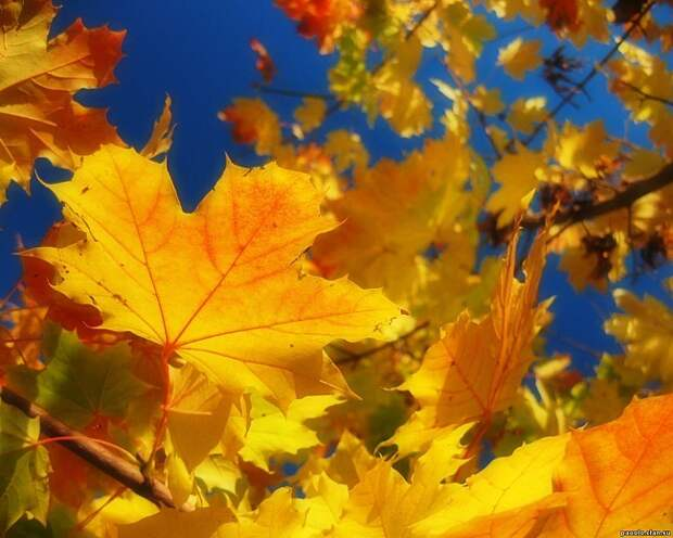 Зачем деревья сбрасывают листья осенью?