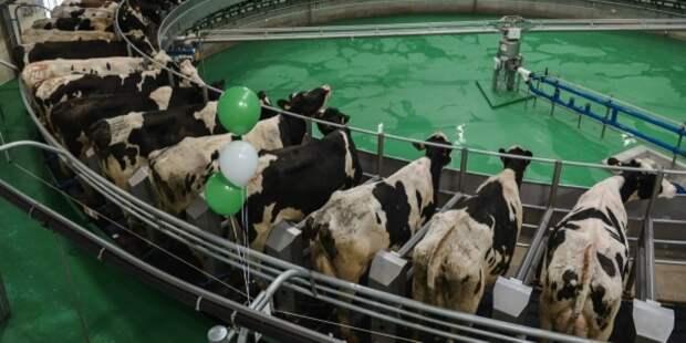 Инвестиции уйдут в молоко Дюрра