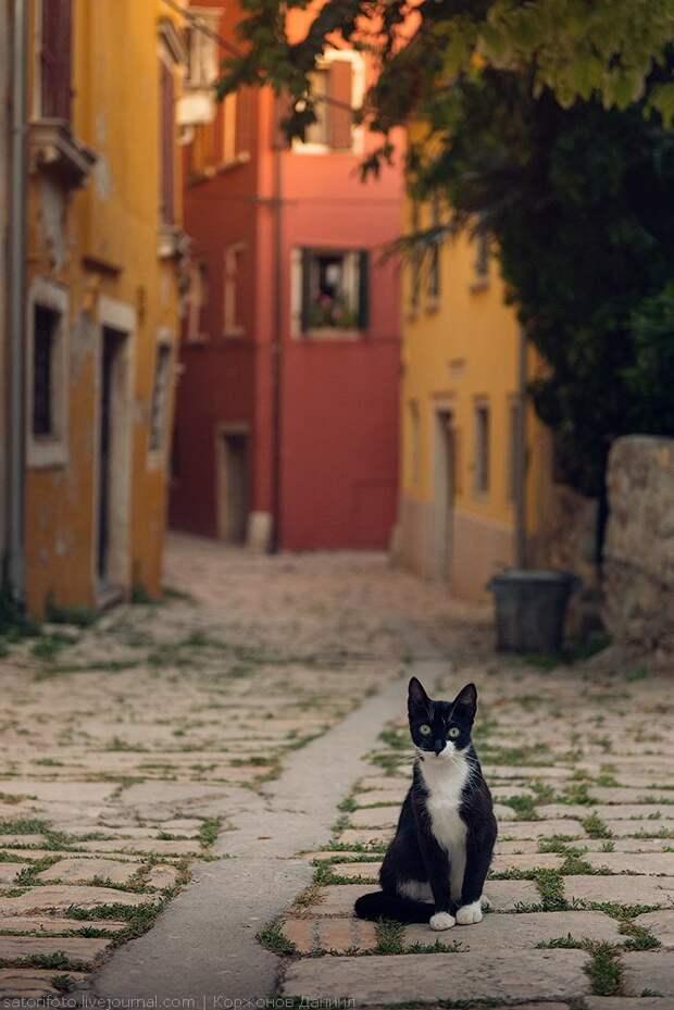 Прогулка по колоритному городку в Хорватии