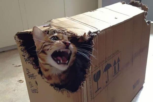 funny-tumblr-cats-55-5811f3f4e665d__700