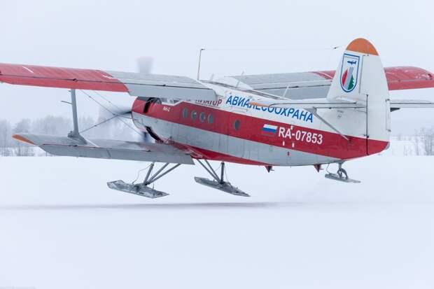 Самолёты на лыжах: как это работает и зачем нужно