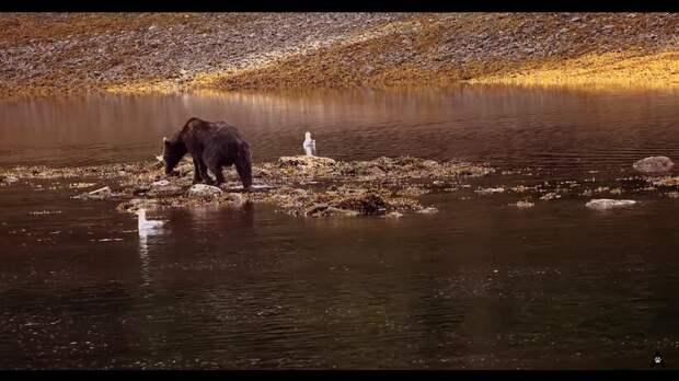 Видео: Блогеры идут по следам самого большого сухопутного хищника — медведя гризли