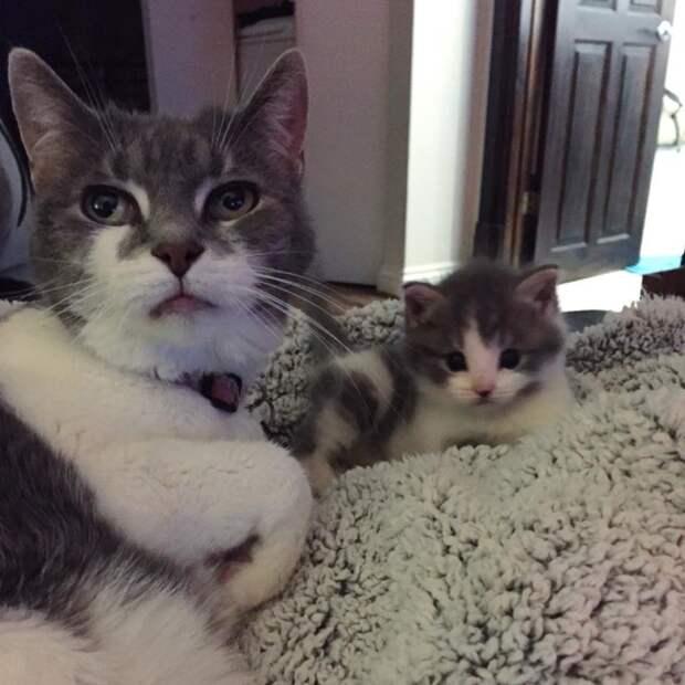 Старая кошка взяла опеку над маленьким найденышем как добрая бабушка