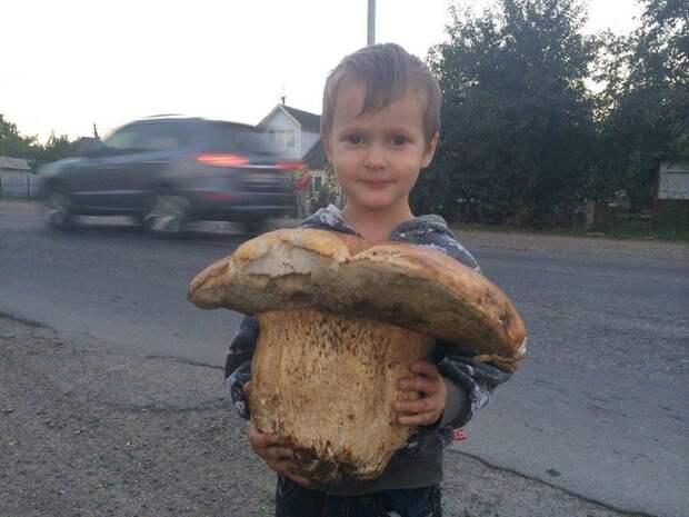 Просто ОГРОМНЫЕ грибы. Подборка фотографий история, факты