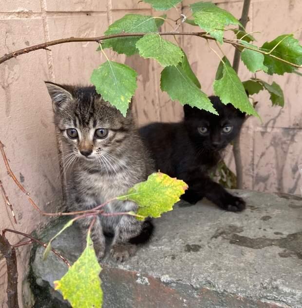 Помогите, пожалуйста, этим малышам! Возьмите хоть одного из котят на время или навсегда)
