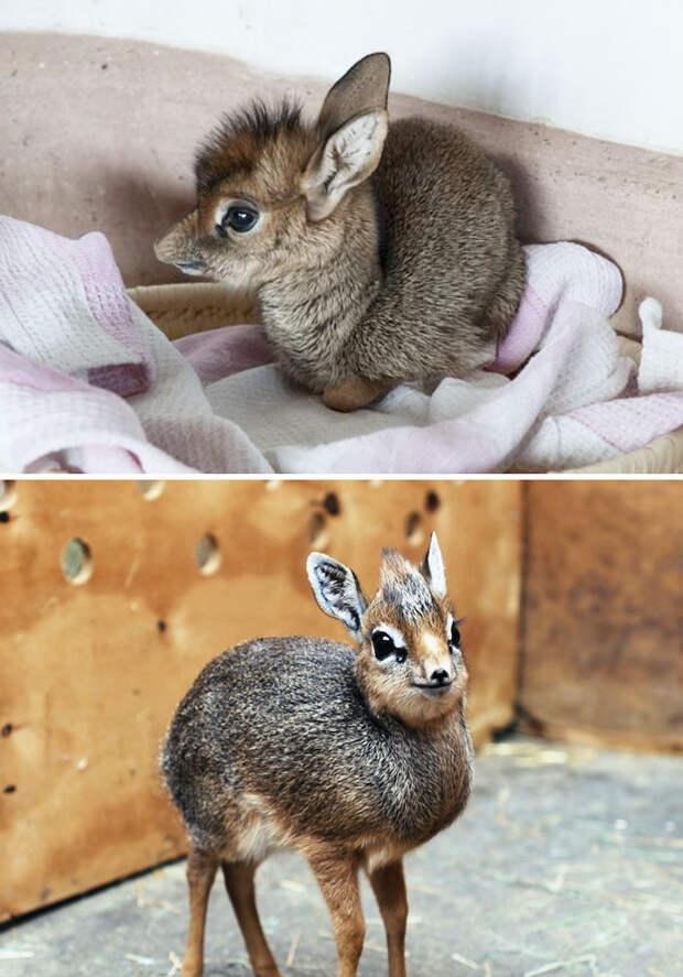 Детеныши редких животных, которых вы вряд ли видели