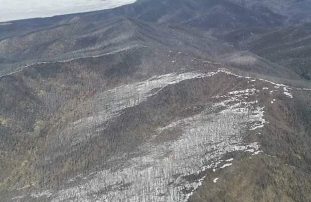 В заказнике Бурятии восстановят лес