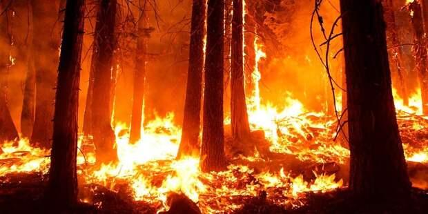 Лесные пожары угрожают Западному побережью США