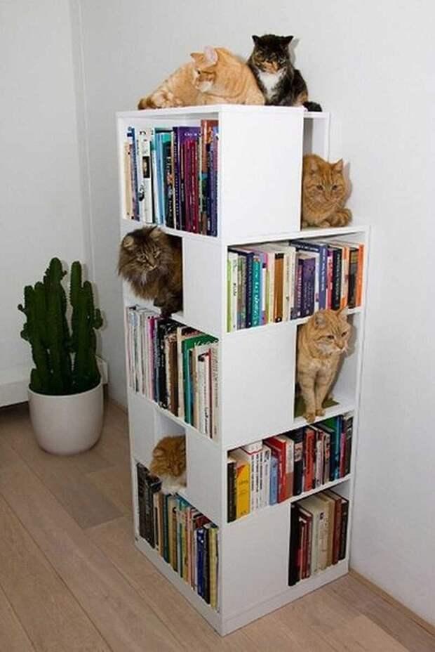 cathouse20 Дизайн для котов