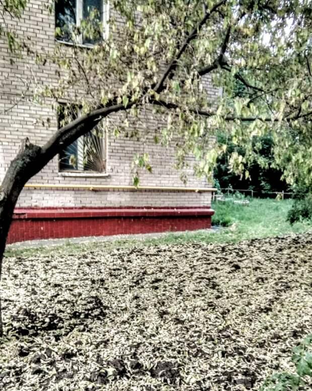За растениями на улице Расковой будут следить внимательнее