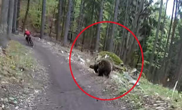 На велосипеде от медведя: парень чудом сбежал от хозяина леса