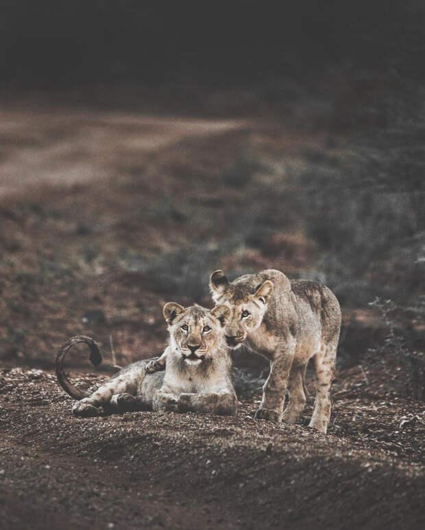 Когда дикая природа вызывает восторг. Фотограф Донал Бойд 26