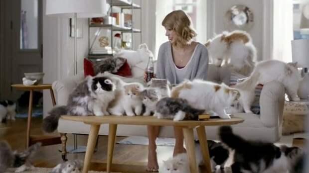 Тейлор Свифт выпила с котиками