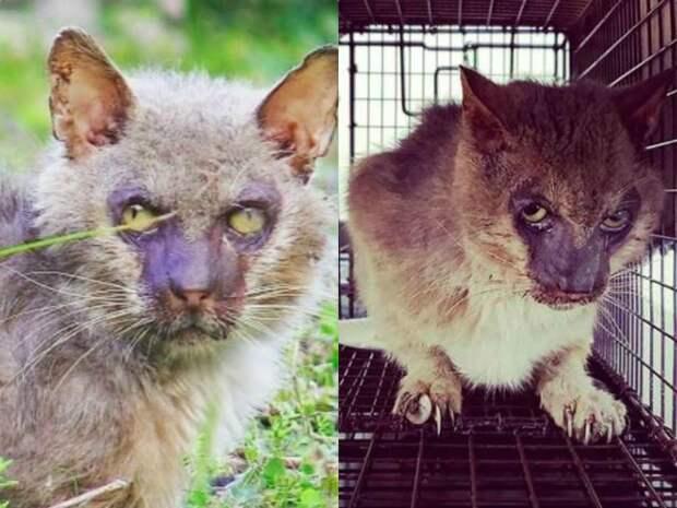 Люди сторонились устрашающего кота, но он просто нуждался в любви история, история спасения, коты, кошка, кошки, помощь животным, спасение животных
