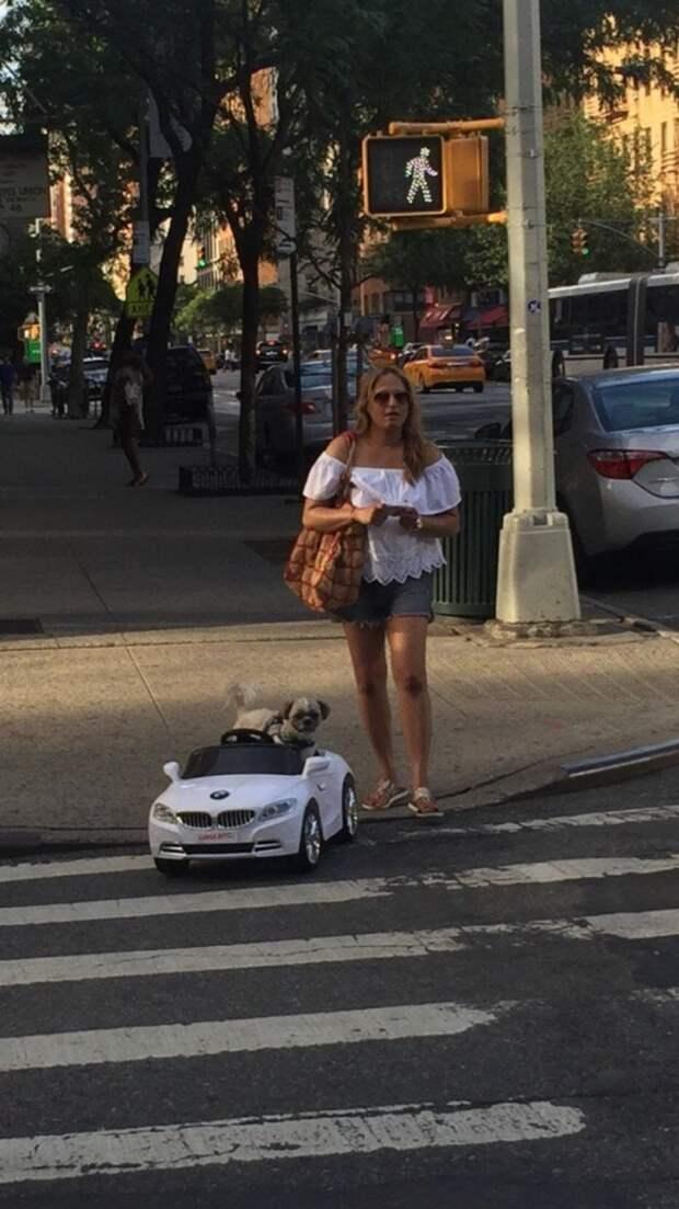 Кто может похвастаться BMW? животные, жизнь, мир, роскошь, собака, удобство, фото