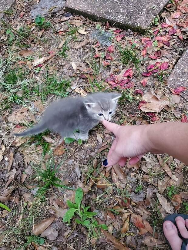Женщина попросила кормящую кошку привести своих котят, чтобы о них позаботиться
