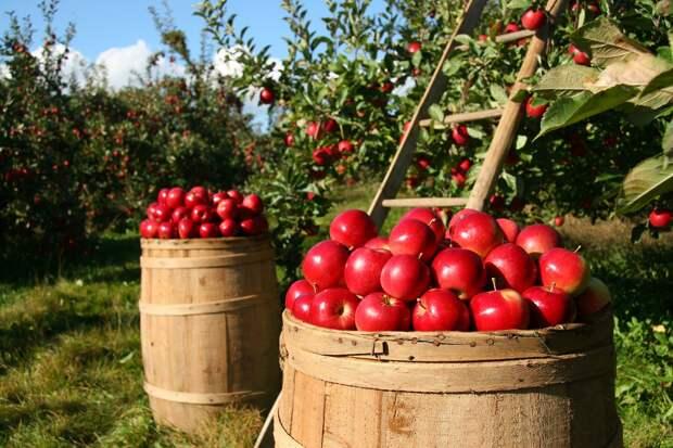 Куда деть яблоки: топ-3 необычных рецепта