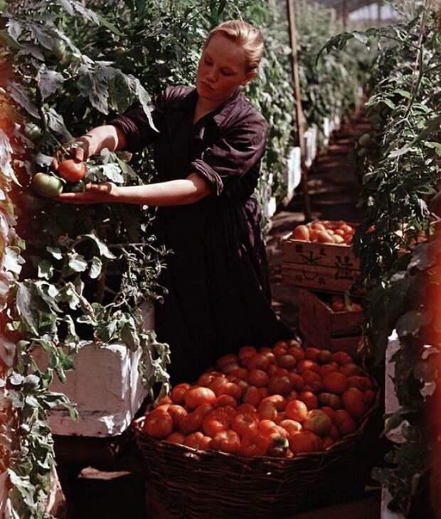 Московская область, 1950 50-е, СССР, история, моменты, повседневная жизнь, редкие фото, советский союз, фото