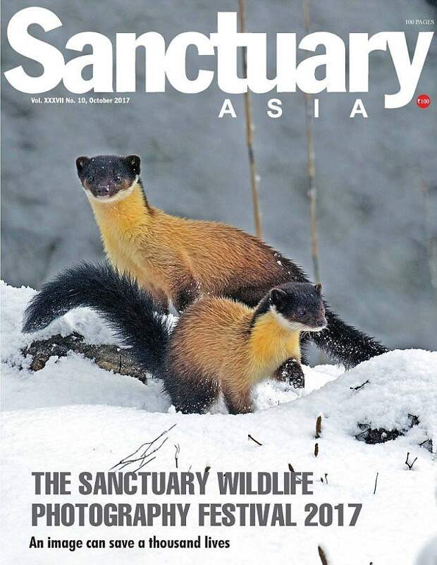 """Азиатский журнал Sanctuary удостоил снимок награды, и назвал ситуацию """"издевательством, которое стало обычным делом"""" жестокость, животные, индия, премия, происшествие, слоны, фото, шок"""