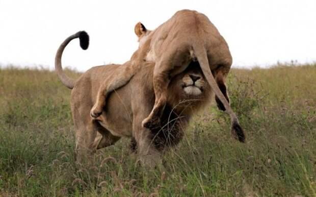 26 забавных фотографий с животными