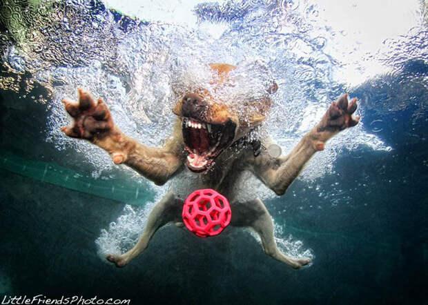 Невероятный позитив: Собаки ловят мячик под водой
