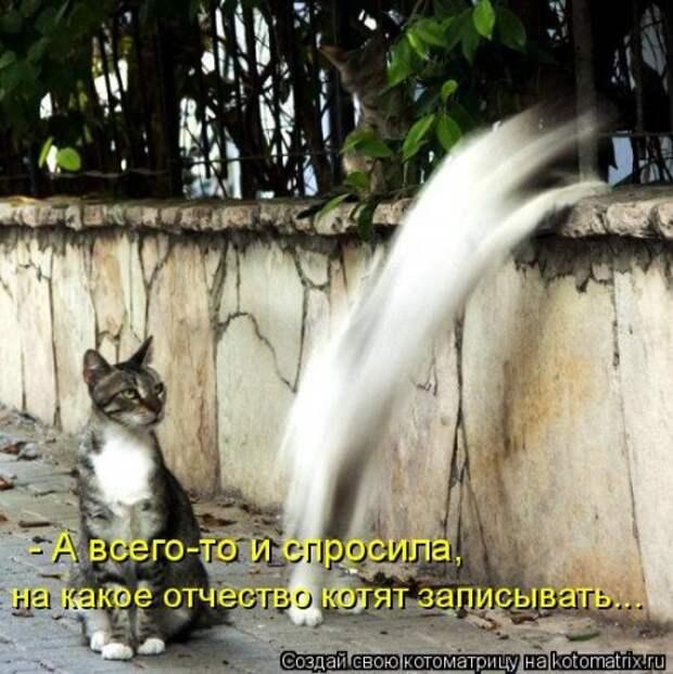 Новая котоматрица для всех (33 фото)