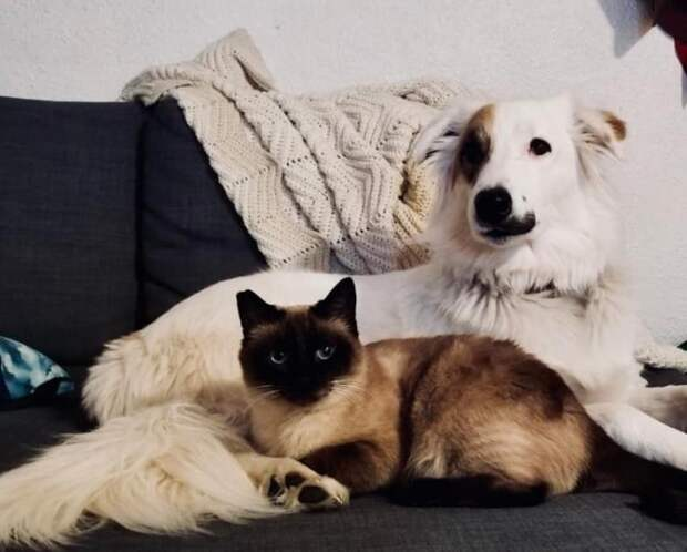 Для чего вообще придумали поговорку про «кошку с собакой», если в реальности сплошь иначе?