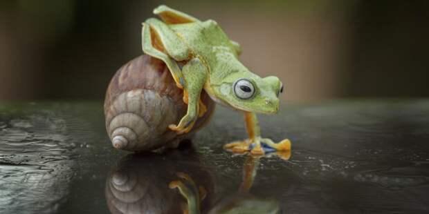 Лягушка прокатилась на улитке