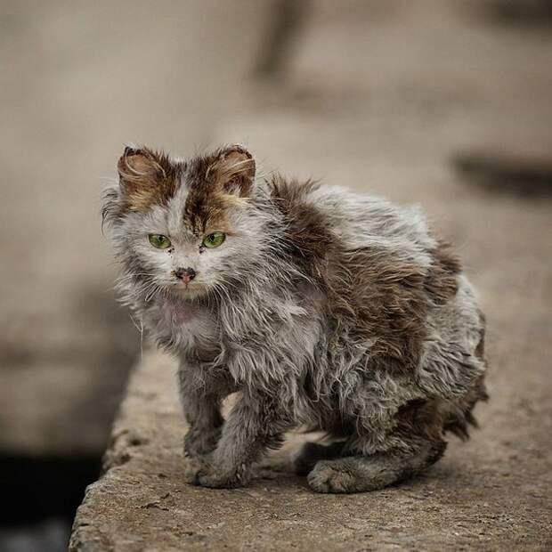 Уродливый кот, стихотворение