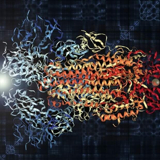 Чарующие звуки COVID-19:  биологи США превратили вибрациюбелков коронавирусав звук