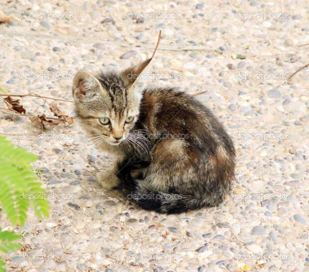 О кошках без умиления, и их хозяевах - сволочах