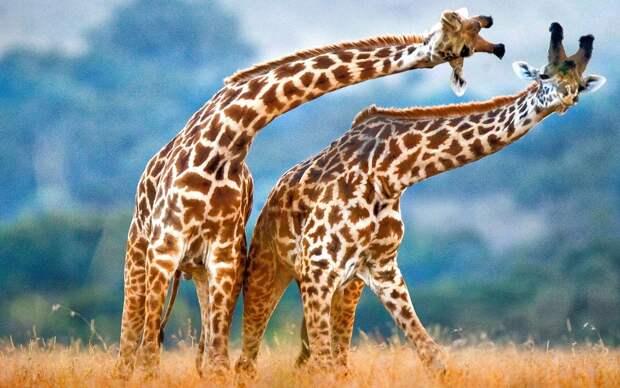 luchshie foto zhivotnyh za 2 nedelyu yanvarya 3 Лучшие фотографии животных со всего мира за неделю