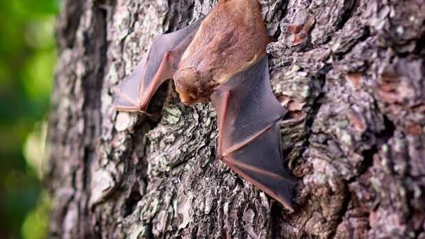Ученые рассказали, как развить у себя способности летучих мышей