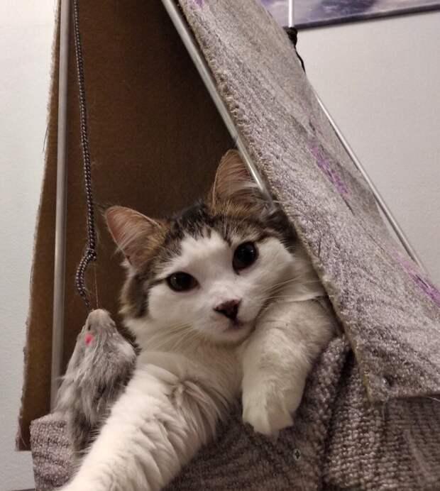 Но все самое интересное началось уже в квартире супругов животные, истории спасения, кошка, кошки, помощь животным, приют