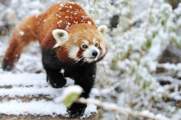 Забавные и симпатичные животные