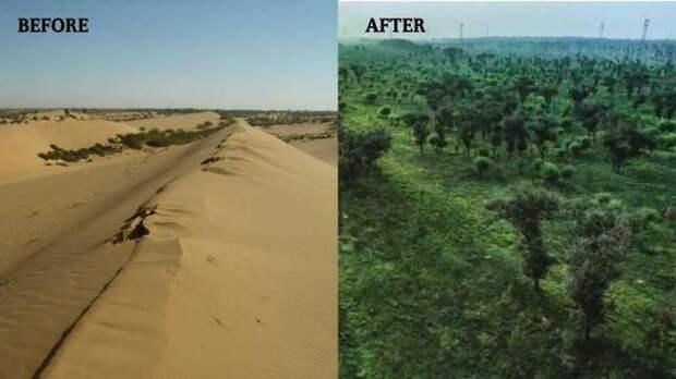 Пустыня Му-Ус исчезла Китай, Пустыня, Было-Стало, Озеленение