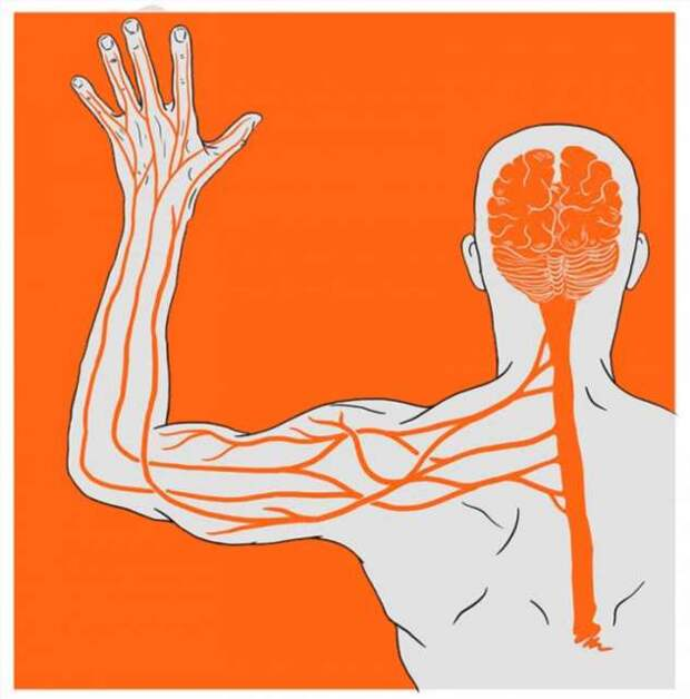 Мощный лечебный инструмент: восточная практика самооздоровления (5 фото)