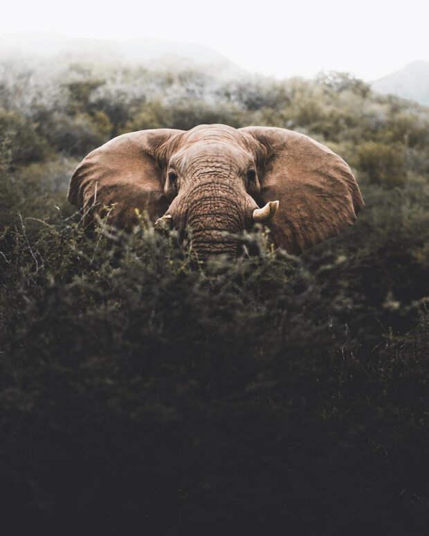 Когда дикая природа вызывает восторг. Фотограф Донал Бойд 48