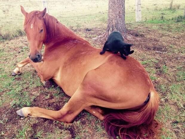 Кот и Конь